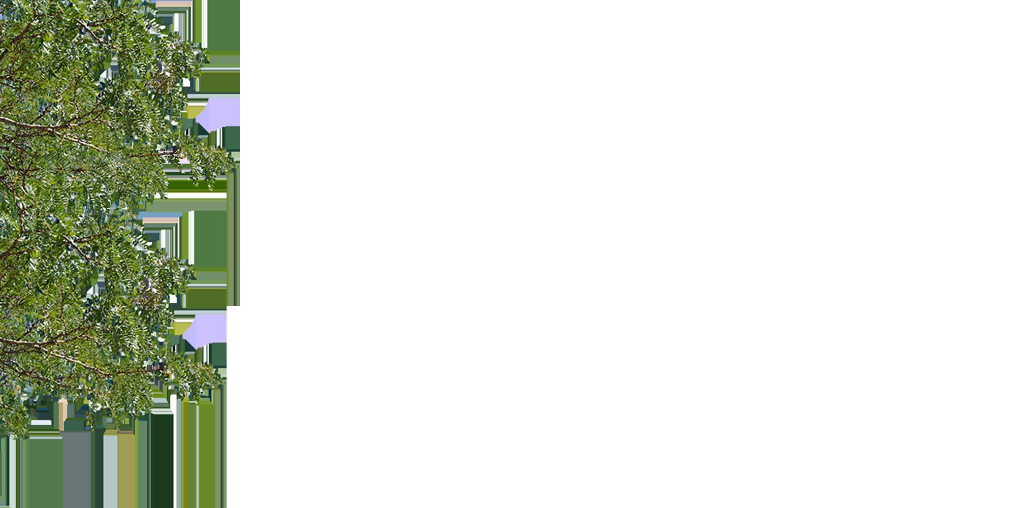 PEFKOS 5